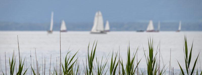 sailing-boats-5585743_1920